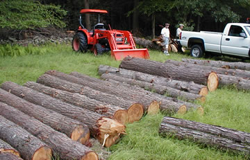 Ulster County logging