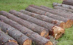 Hemlock logs